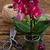 primavera · violeta · orquídeas · rosa · florescimento - foto stock © neirfy