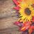 virág · egyezség · piros · narancs · citromsárga · izolált - stock fotó © neirfy