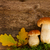 fraîches · comestibles · champignons · herbe · personne - photo stock © neirfy