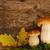 saisonabhängig · Pilze · weiß · Wald · Natur · Schönheit - stock foto © neirfy