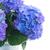 albastru · oală · floare · flori · grădină - imagine de stoc © neirfy