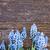 çiçekler · tablo · taze · mavi · ahşap · doğa - stok fotoğraf © neirfy