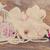 magnolia · bloemen · roze · witte · boom · hemel - stockfoto © neirfy