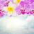 pembe · orkide · çiçekler · yalıtılmış · beyaz - stok fotoğraf © neirfy