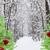 verde · árvores · vermelho · neve - foto stock © neirfy