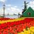 moulin · à · vent · tulipes · domaine · coloré · orange - photo stock © neirfy