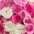 buquê · fresco · rosas · rosa · branco · rosa - foto stock © neirfy