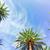 quadro · verde · árvores · silvicultura · plantação · ensolarado - foto stock © neirfy