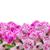 rose · vase · bois · texture · printemps · rose - photo stock © neirfy