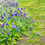 anemone and daffodils lane stock photo © neirfy