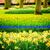 formal · jardins · belo · geométrico · projeto · jardim - foto stock © neirfy