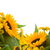 fleurs · isolé · sécher · blanche · feuille · été - photo stock © neirfy