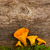 chanterelles stock photo © neirfy