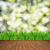 wooden planks with green grass stock photo © neirfy