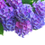 branco · jardim · fresco · flores · verde · arbusto - foto stock © neirfy