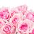 国境 · ピンク · 庭園 · バラ · 青空 · バナー - ストックフォト © neirfy