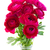 bunch of pink ranunculus flowers stock photo © neirfy
