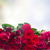 frontière · roses · rouges · rouge · rose · roses · bois - photo stock © neirfy