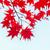 brilhante · vermelho · cair · folha · luz · do · sol - foto stock © neirfy