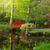 japanese garden with bridge stock photo © neirfy