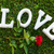 love sign with rose stock photo © neirfy
