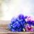blue cornflowers stock photo © neirfy