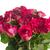granicy · czerwony · różowy · róż · odizolowany - zdjęcia stock © neirfy
