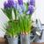 fiore · isolato · bianco · sfondo · estate - foto d'archivio © neirfy