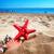 starfish ans seashells on sea shore stock photo © neirfy