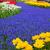 春の花 · オランダ · 庭園 · カラフル · 緑 · 木 - ストックフォト © neirfy