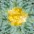 örökzöld · faág · háttér · zöld · absztrakt · természetes - stock fotó © neirfy