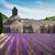 abdij · lavendel · veld · Frankrijk · gebouw · veld · architectuur - stockfoto © neirfy