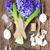 jardinagem · jacinto · fresco · flores · azul · pá - foto stock © neirfy