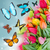 kolibrie · vliegen · bloem · oranje · natuur · mier - stockfoto © neirfy