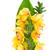 vízfesték · virágmintás · trópusi · orchidea · virágok · búcsú - stock fotó © neirfy