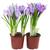 два · синий · цветы · изолированный · белый · цветок - Сток-фото © neirfy