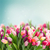 bunch of pink tulips stock photo © neirfy
