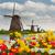 holland · veld · tulpen · prachtig · levendig · bloem - stockfoto © neirfy