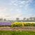 narcis · hyacint · veld · Nederland · bloemen · voorjaar - stockfoto © neirfy