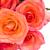 turuncu · pembe · güller · sınır · yalıtılmış · beyaz - stok fotoğraf © neirfy