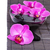 zen stones and orchid stock photo © neirfy