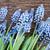 çiçekler · tablo · taze · mavi · ahşap · masa - stok fotoğraf © neirfy