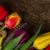 Purple · пасхальных · яиц · таблице · Пасху · воды · природы - Сток-фото © neirfy