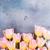 tavasz · űr · rózsaszín · virág - stock fotó © neirfy