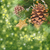 evergreen · albero · Natale · frame - foto d'archivio © neirfy