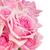 bahçe · güller · sınır · pembe · bokeh - stok fotoğraf © neirfy