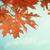 желтый · тополь · листьев · Blue · Sky · дерево · подробность - Сток-фото © neirfy