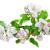 manzana · hojas · aislado · blanco · superior · vista - foto stock © neirfy