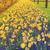 güzel · nergis · açık · havada · bahar - stok fotoğraf © neirfy