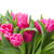 bouquet of multicolored tulip flowers in white pot stock photo © neirfy